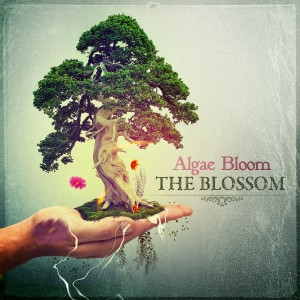 Algae Bloom – The Blossom